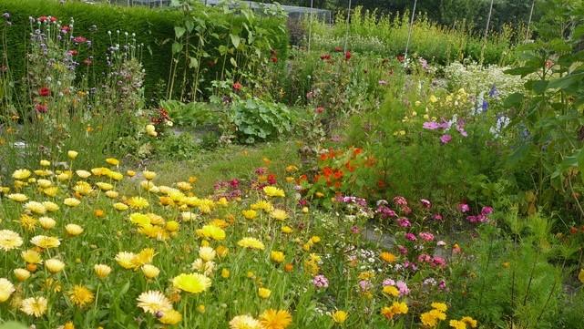 Bloem En Tuin : Bloementuin biologische tuin nuenen